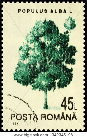 Moscow, Russia - December 30, 2019: Stamp Printed In Romania Shows Tree Abele Or Silver Poplar Or Wh