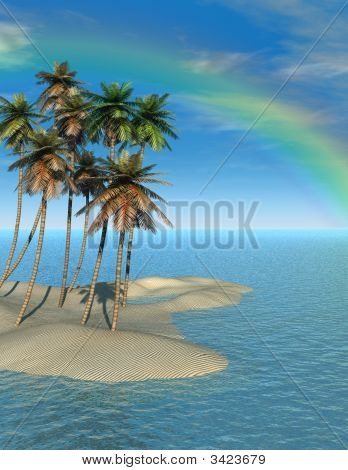Palm Trees And Ranbow