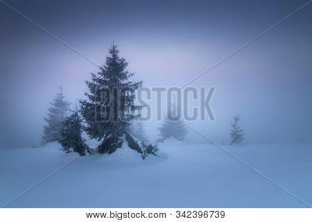 Winter Landscape In Slovakia. Velka Fatra Mountains Under Snow. Frozen Snowy Trees And Dark Sky Pano