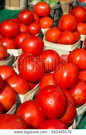 A Display Of Tempting Red Tomatoes Shine In The Sunlight As Lingering Raindrops On Their Surface Giv