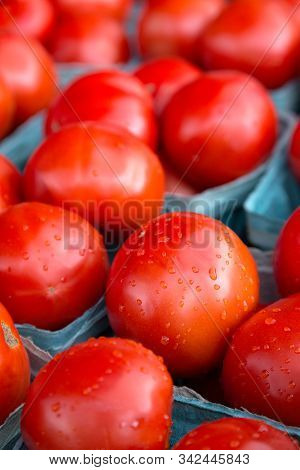 Luscious Ripe Red Tomatoes With Fresh Raindrops Tempt The Tastebuds Of The Viewer. The Bright Red To