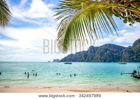 People Swimming In Andaman Sea Off The Coast Of Thailand. Palm Tree At Ao Tonsai Beach In Phi Phi Is