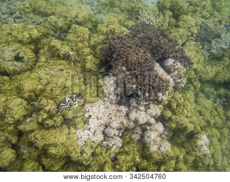 Cloudy View Of Underwater Reef Coral In Murky Water At Low Tide. Image Taken Underwater By Tourist S