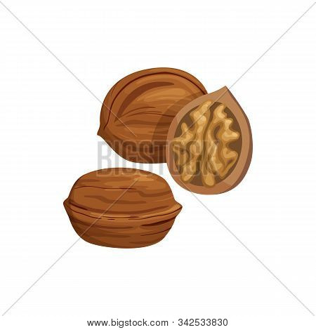 Walnut Whole And Cut Fruit With Kernel Isolated Sketch. Vector Natural Food Snack, Nut In Nutshell
