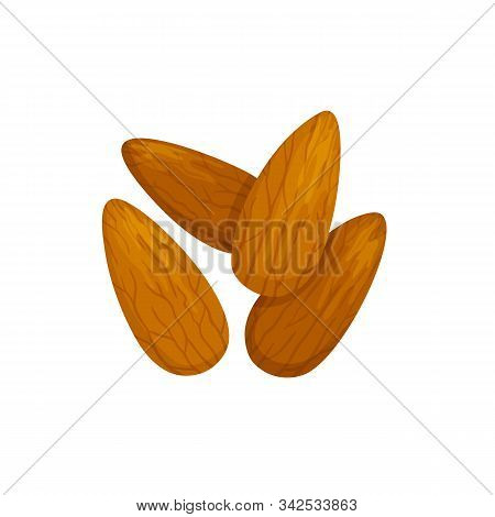 Shelled Almond Seeds Isolated Drupes Of Fruit. Vector Edible Seeds, Natural Vegetarian Food