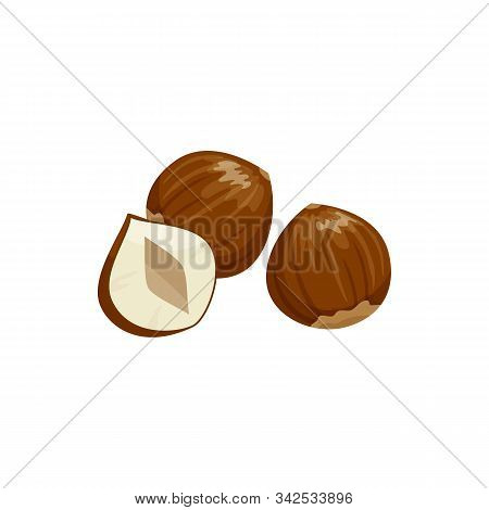 Hazelnut Cobnut Or Filbert Nut Isolated Food Snack. Vector Nut Of Hazel Whole And Cut