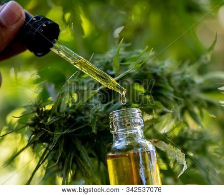 Doctors Hold A Bottle Of Hemp Oil, Marijuana Products For Medical Use, Including Hemp Leaf, Cbd, And