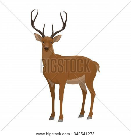 Deer Wild Forest Animal Vector Icon. Isolated Zoo Hoofed Mammal And Hunt Trophy Reindeer