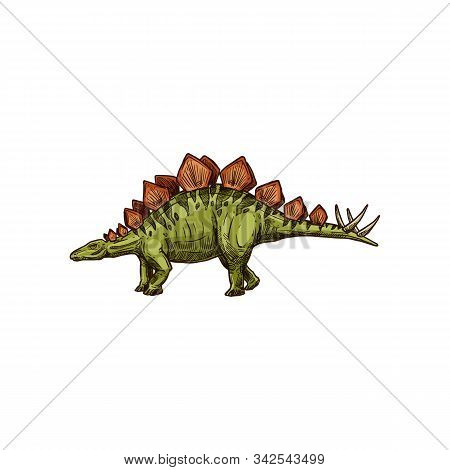 Stegosaurus Isolated Cartoon Triceraptor Graze. Vector Kentrosaurus Prehistoric Predator Animal