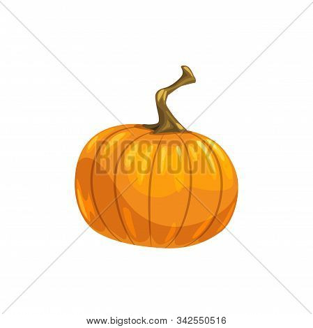 Orange Fresh Pumpkin With Stem Isolated Autumn Vegetable. Vector Ripe Gourd, Fall Harvest