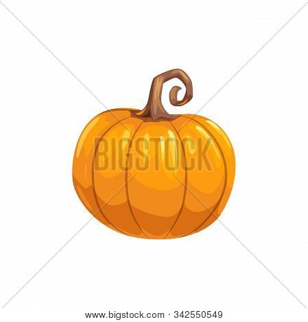 Pumpkin Ripe Gourd, Fall Harvest Vegetable. Vector Squash With Stem, Autumn Food