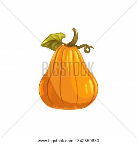 Pumpkin With Stem Isolated Gourd Vegetarian Food. Vector Autumn Gourd, Halloween Symbol