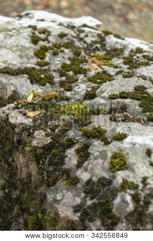 Green Moss Grows On Stones. Wild Nature. Moss On The Stones Close-up. The Texture Of The Stone. The