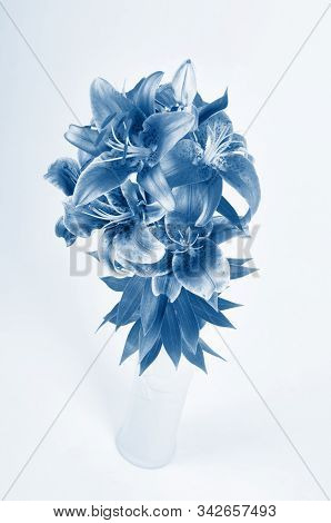 Studio Shoot Of Purple Lily Bouquet In Vase. In Trendy Classic Blue Colors