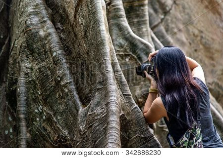 Young Woman With Shoulder Bag And Using A Camera To Take Photo Giant Big Tree, Size Comparison Betwe