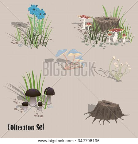 Forest Vegetation. Mushrooms, Flowers, Grass, Stump. Set Of Vector Images For Design. Vector Illustr