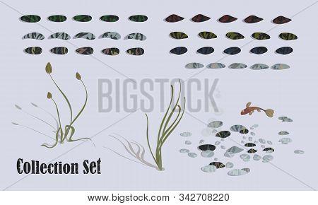 Aquatic Vegetation And Life. Algae, Stones, Fish. Set Of Vector Illustrations For Design.