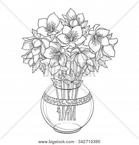 Vector Bouquet With Outline Hellebore Or Helleborus Or Winter Rose, Bud And Leaf In Round Vase In Bl