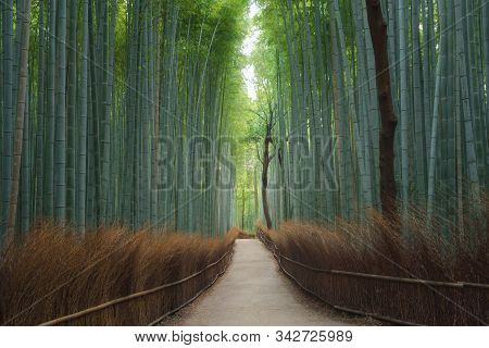 Road Trail Or Path Way At Japanese Bamboo Forest At Arashiyama In Travel Holidays Vacation Trip Outd