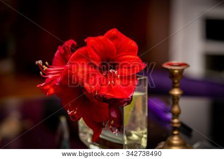 Three Red Amaryllis (hippeastrum)  Flowers In A Translucent Glas Vase With A Brass Candle Holder