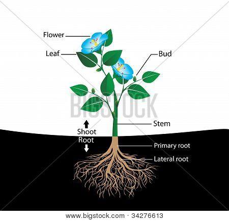 structure flower