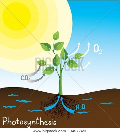 photosynthesis vector image