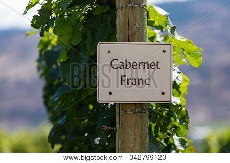 Cabernet Franc Wine Grape Variety Sign On Wooden Pole Selective Focus, Vineyard Varieties Signs, Oka