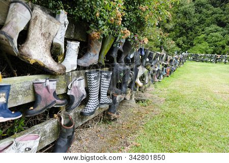 Gum Boot Fence, Bay Of Plenty, New Zealand