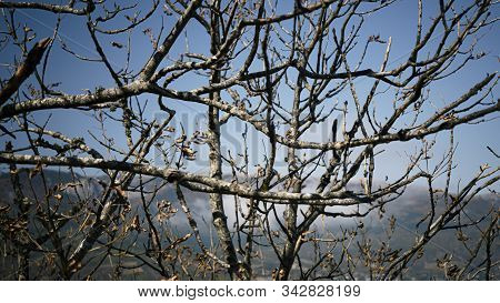 Landscape. Scenery. Branches Of A Dried Tree On A Background Of Mountains. Abstract Landscape. Autum
