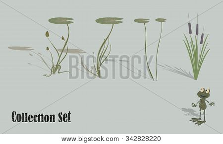 Aquatic Vegetation And Life. Water Lilies, Reeds, Frog. Set Of Vector Illustrations For Design.