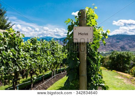 Merlot Wine Grape Variety Sign On Wooden Vertical End Post, Canadian Vineyard Varieties Signs, Okana