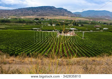 Dry Grass Against A Top View Of Farmhouses And Vineyards On The Road Sie, Okanagan Valley Wine Regio