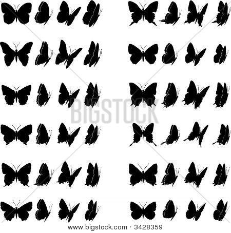 Schmetterling Kollektion