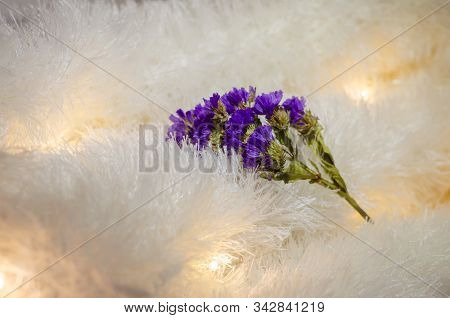 Lilac Flower On A Light Fleecy Fabric. Fluffy Fabric With Pleated Bulbs. Multitask Background. Selec