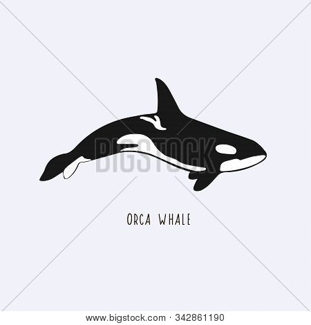 Orca Whale. Vector Drawing Of A Killer Whale. Illustration Of A Whale.