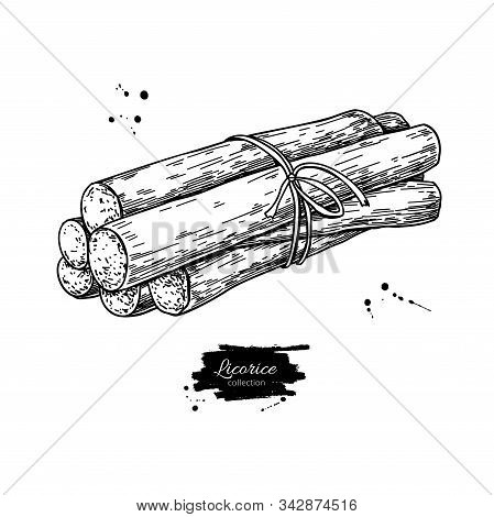 Licorice Root Bunch. Vector Drawing. Botanical Illustration.