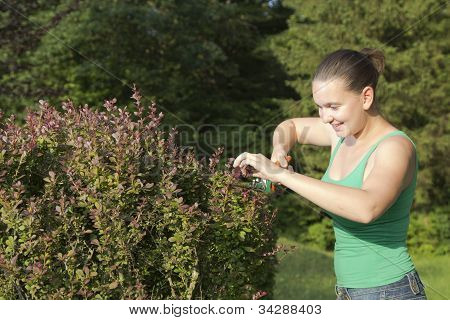 Girl cutting and trimming hedges