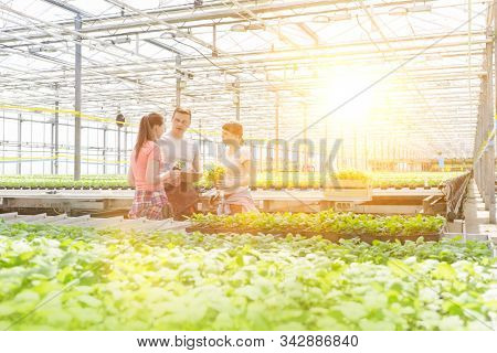 Male botanists discussing with female coworkers while standing amidst seedlings in greenhouse