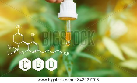 Pipette In The Hands With Hemp Cbd Oil. Beautiful Background With Cbd Cannabis Formula, The Concept