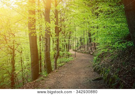 Path On Slope Of Hill, Beech Trees Trees With Green Leaves On Branches In Slavkov Thick Dense Foliag