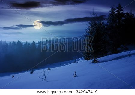 Winter Fairy Tale Scenery In Mountains At Night. Beautiful Nature Scenery With Coniferous Forest In