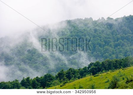 Clouds Rise Above The Forested Forest. High Volume Humidity Weather. Foggy Atmosphere. Mysterious Na