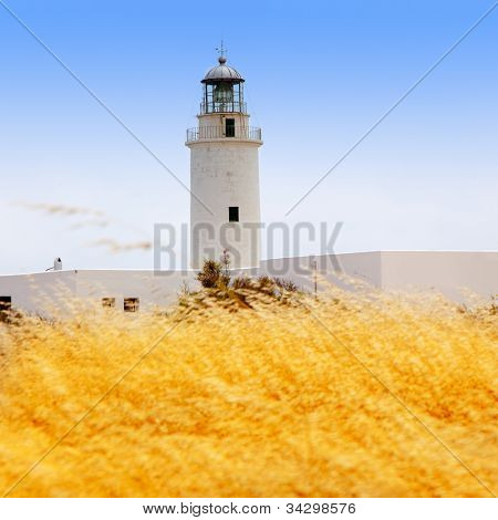 La Mola lighthouse in formentera with golden dried grass field
