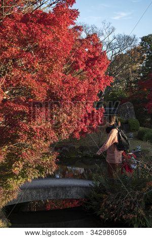 Himeji, Japan- 30 Nov, 2019: Tourists Enjoy The Beautiful Autumn Leaves In Koko-en, Himeji. Here Is