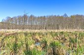 Swamp landscape with blue sky and green grass poster