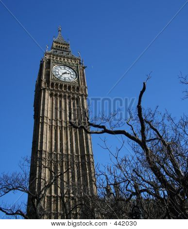 Big Ben And Winter Branches