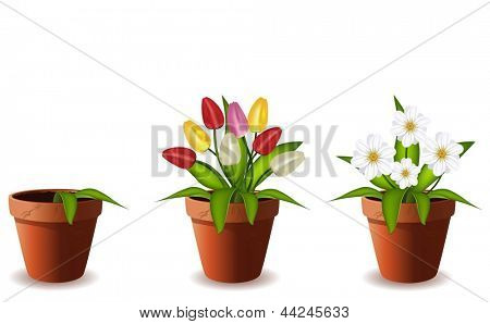 Plants in flowers pot.Vector illustration.