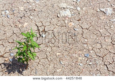 Live In Dried Land