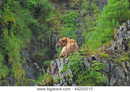 Young Bear Resting In The Wilds