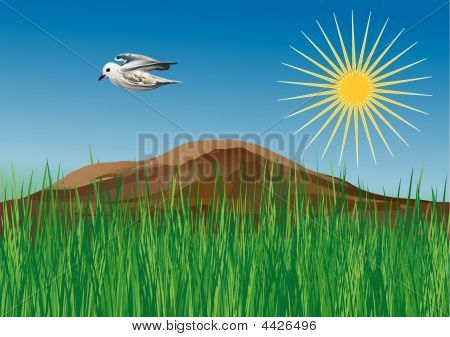 Vector Illustration - Spring On The Meadow With Seagull Flying